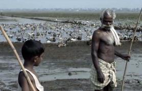 Okusi Indije 2017 | Past (vstop prost)