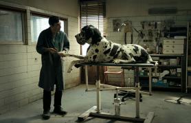 Dogman | Z LIFFa v Loko