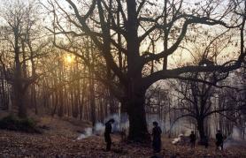 Zgodbe iz kostanjevih gozdov | Filmsko gledališče