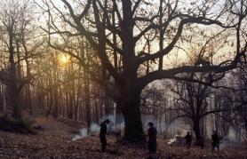 Zgodbe iz kostanjevih gozdov | Z LIFFa v Loko